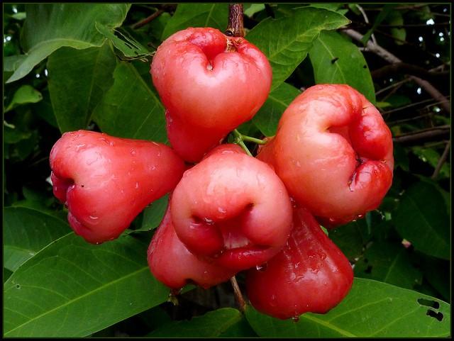 Apples - Wax (each)