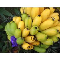 Bananas - Yellow (bunch)