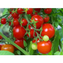 Cherry tomatoes (lb or punit)