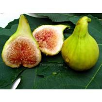 Figs - Syrian (each)