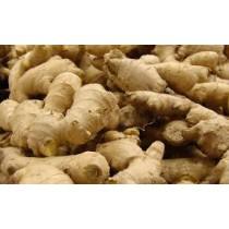 Ginger Root (fresh) (each)
