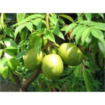 Hog plums (lb)