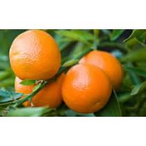 Mandarins (each)
