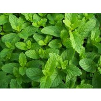Mint (bunch)