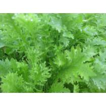 Mustard Greens (each)