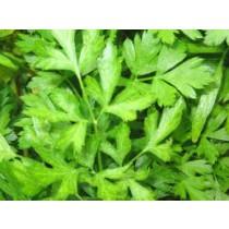 Parsley - Flat Leaf (bunch)