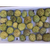 Sugar Apple (each)