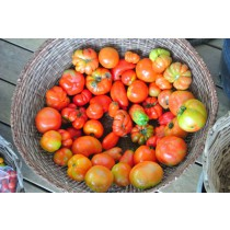 Tomatoes (lb or punit)