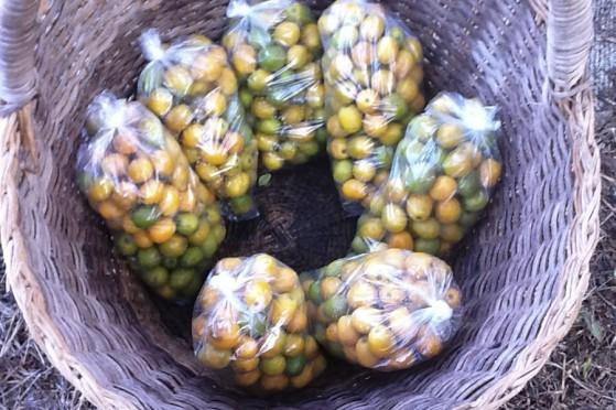 Fruit Baskets